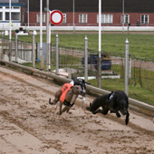 greyhound-racing-s.jpg